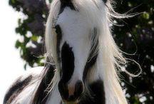 Cavalos de raca