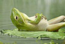 Frog / Paint / Art