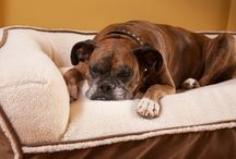 Our Dog Beds