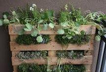 Gardening / by Roxanne Smith