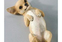 Chihuahua / by Jacqueline Harford