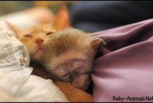 Baby monkey / Baby monkey pictures