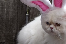 Easter with Pets / Pets dressed up for easter, or easter pet accessories. / by Treasured Friends - Pet Memorials / Pet Keepsakes