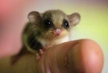 too cute!!!!!!