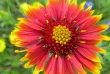 Wild flowers  / by Becky Sullivan