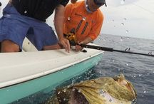 Florida Fishing Tips / Florida is a hotspot for fishing, and no wonder! Along with saltwater fishing in the warm Gulf waters, it also offers canals, rivers, lakes and excellent backwater fishing. Our favorite fishing spots and tips along with the best charter fishing operators in Sarasota, Siesta Key, Fort Myers, Sanibel, Naples, and Marco Island.