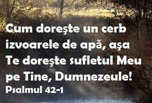 VERSETE, CITATE, BIBLIE