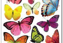kelebekler a