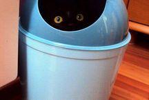 Gatti / Forografie di gatti trovati online su Pinterest.