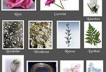 DOKUMENTASJON - Valg av blomster