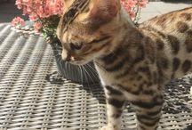 Kitties ♡