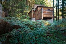 Dichten Wald In British Columbia Schmiegt Sich Haus Des Künstlers Durch Agathom