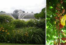 Kew gardens herbs