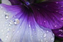 Fioletowelove / Fotografia makro, kropelki, fiolet