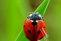 Lady bugs & crawling, flying, bug things / Beautiful lady bugs who visit our gardens. Along with other creepy, crawly, specimens of insects that invite themselves into our gardens, yards and anywhere they desire. / by Jeanne Newby