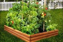 Gardem, greens, vegies smeal good