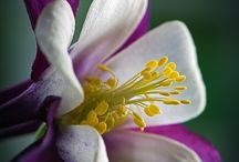! Photos of Flowers / IF YOU WANT TO JOIN THIS BOARD SEND ME A REQUEST..