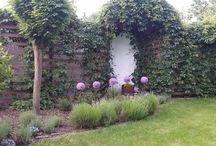 my sweet garden