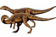 """Dryosaurio / Vivió en el Cretácico superior y en el Jurásico inferior. Su nombre significa """"Lagarto roble""""."""