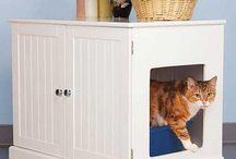 kattedoer
