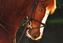 Horses / by Susan Hill