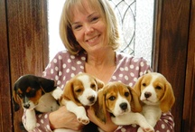 """Pets, Shelter fosters & Shelter volunteering (Puppies!) / All my pets (3 dogs & a cat) are shelter rescues. I volunteer at my local animal shelter.  """"Saving one dog may not change the world. But you can change the world for that one dog."""" --annon  / by Catherine Mann"""