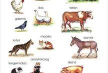 háziállatok