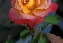 Naturaleza / Plantas y flores súper lindas