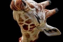 Animals I love! / by Kristen Collins