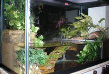 Frogs & paludariums