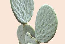 Plant's