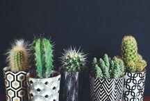 Kaktusz <3
