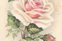 Rosas & Rosas