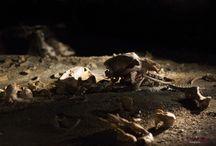 Grotte CHAUVET (La Caverne) / Pour admirer cet extraordinaire ensemble de peintures, dessins et gravures, la plus importante réplique de grotte ornée au monde a été créée et vous accueille sur les hauteurs de Vallon-Pont-d'Arc, au cœur d'un site naturel d'exception .