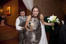 Dogs are Part of the Family Too / Weddings with mans best friend