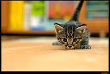 Katt / Katter