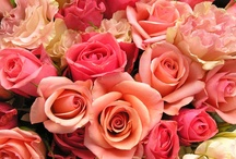 The Sweetness of Pink / Pink symbolizes love, romance, caring, tenderness, acceptance and purity.  Such a pretty color, dont you agree?