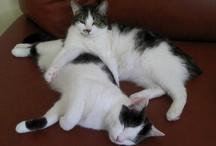 My Cats / Leon i Bąbel