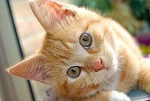 Katzen / Aus Liebe zur Samtpfote ... die schönsten Katzenbilder