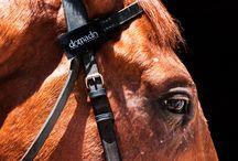 """Domado y la Hipica  / Domado se encuentra inspirado en la hípica, siendo este el mundo de las apuestas. Domado rescata este concepto y lo transmite a través de sus productos por medio del lema """"Betting for a life"""" ,es decir, apostando por la vida, por la vida de los caballos.  Son productos 100% libre de crueldad, lo que quiere decir que  ningún animal sufre en el proceso de confección, ya que el proceso de caída o corte del crin es necesario para los caballos."""