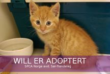 Adopted animals 2014 / A handful of animals adopted in the year 2014