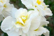 Flowers / by An'gel Ducote