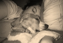 Warm and Fuzzies! / Things that make you go awww, and lots of beagles because I love beagles!  / by Amy Taliaferro