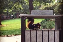 Squirrels of UNL / by University of Nebraska–Lincoln