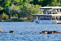 Sunset cruise on the Zambezi River, Zimbabwe / The Zambezi Sunset cruise is a superb way to relax and enjoy the Spectacular beauty of the Zambezi River. Clients may have the opportunity to see a variety of game; including hippo, crocodile, and elephant as well as enjoy the many different bird species. Flocks of birds skim the waterline as the sun sets behind the African skyline. The Sunset cruise is very popular and includes finger snacks, beer, wine, local spirits and soft drinks.