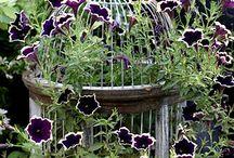 Garden IN birdcage