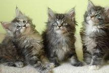 Cats - Kucing / Segala Poto Kucing yang lucu