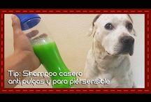 champoo para perros antipulgas y piel reseca y delicada