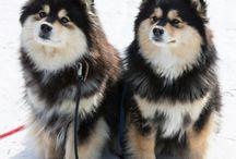 dog breeds list