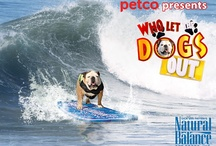 Surfing!  / Dogs love to surf! As a famous Bulldog I surf with my dad, and my brother Sully and sister Rose as often as a I can.